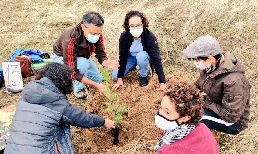 2ª Reforestación del Pinar de San José