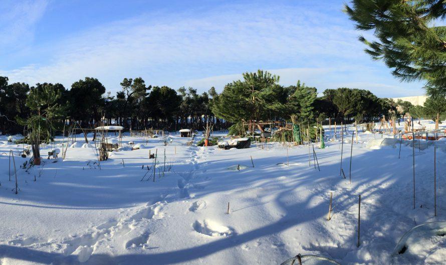 Las consecuencias de la nevada histórica en Huerto Pinar